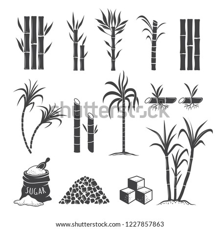 Sugarcane farm symbols. Sweets field plant harvest milling vector colored illustrations isolated on white background