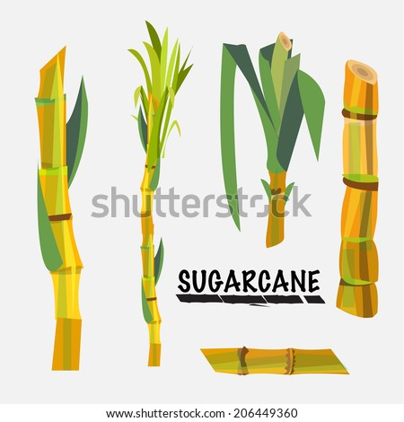 sugarcane vector illustration