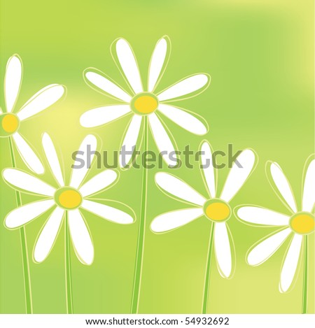 Summer background with chamomile