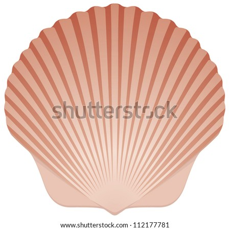 Summer Beach Scallop Sea Shell vector illustration on White Background