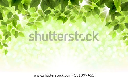 summer branch with fresh green