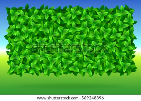 summer  bright background of