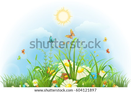 summer floral background with