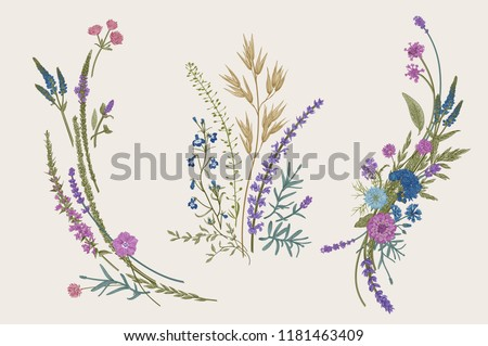 Stock Photo Summer floral composition. Design elements. Flowers and plants of fields and forests. Vector vintage botanical illustration.