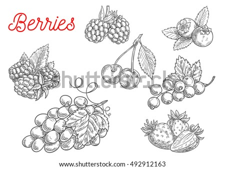 summer fruit and berry sketch