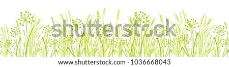 summer green grass isolated on