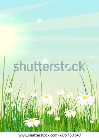 summer landscape glade with