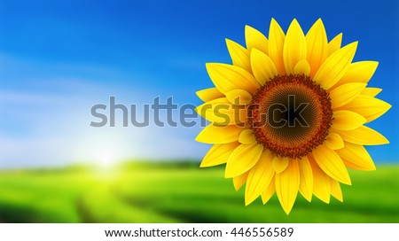 summer landscape with sunflower
