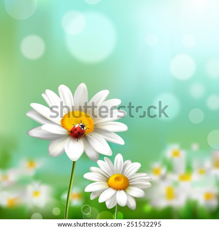 summer meadow background with