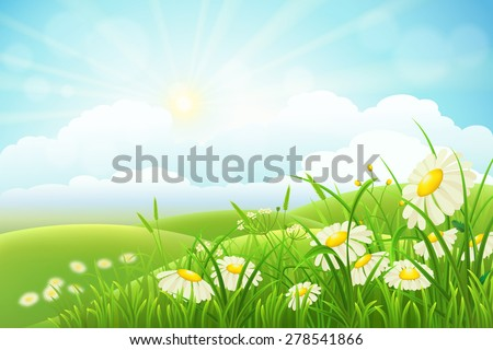 summer meadow landscape with