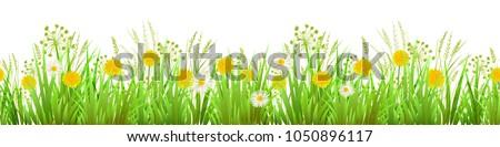 summer or spring green grass