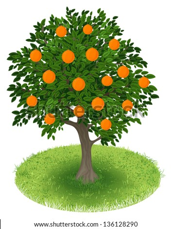 summer orange tree with orange