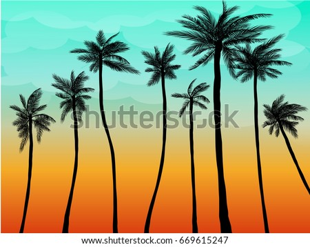 summer palm sunset