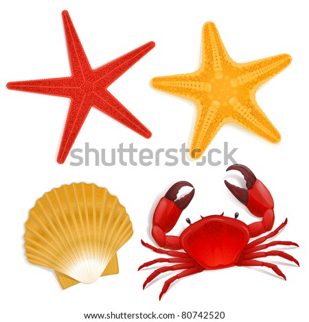 Summer sea life creatures star fish shell red crab