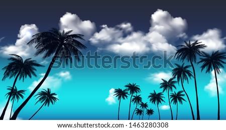 summer sunset palm trees