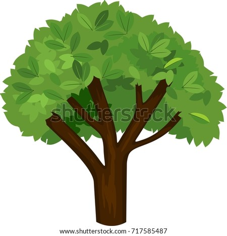 summer tree with green foliage
