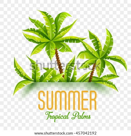 summer tropic coconut palms in