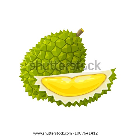 Summer tropical fruits for healthy lifestyle. Durian, whole fruit and piece. Vector illustration cartoon flat icon isolated on white.