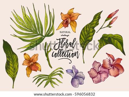 summer vector tropical vintage...