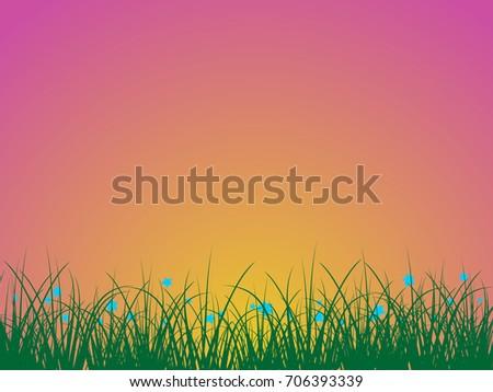 summer wildflowers against