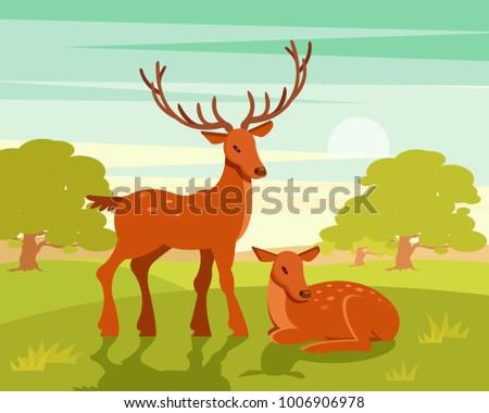 summer wildlife landscape