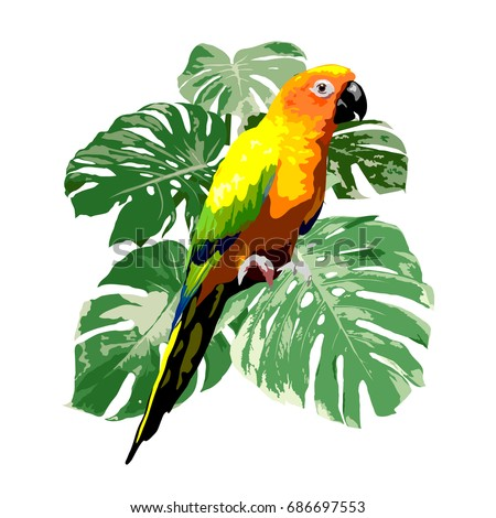sun conure parrot with green