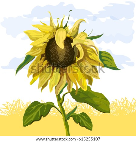 sunflower against the
