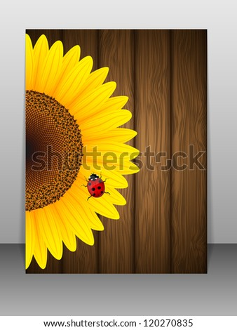 sunflower and ladybird on