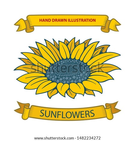 Sunflower and ribbons hand drawing sketch vector illustrations set. Part of set.