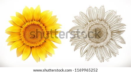 Sunflower. 3d realism and engraving styles. Vector illustration