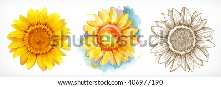 stock-vector-sunflower-different-styles-vector-drawing-icon-set