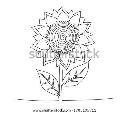 sunflower drawn one continuous