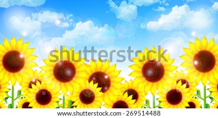 Sunflower flower background