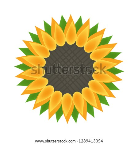 sunflower flower bloom