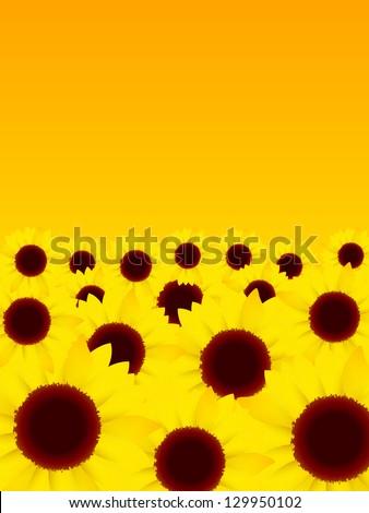 Sunflower flower summer background