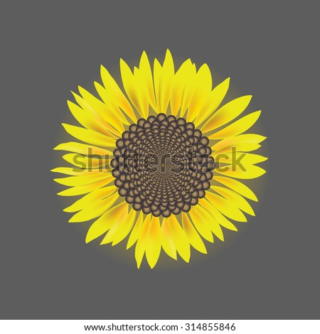 sunflower flower vector isolated