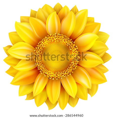 sunflower  high quality  eps