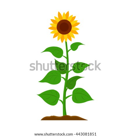 sunflower icon cartoon
