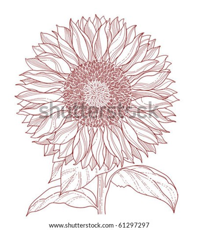 sunflower line art isolated on