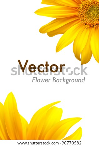 sunflower nature summer vector
