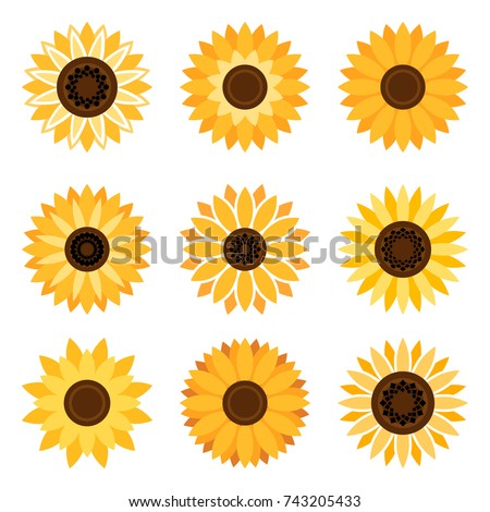 stock-vector-sunflower-plant-icons-isolated-on-white-background-vector-flat-beautiful-sunflowers
