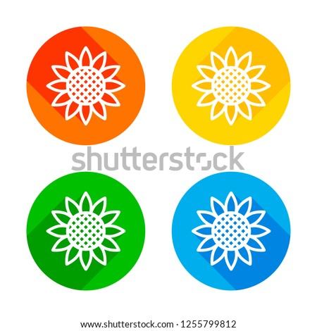 sunflower  plant nature icon