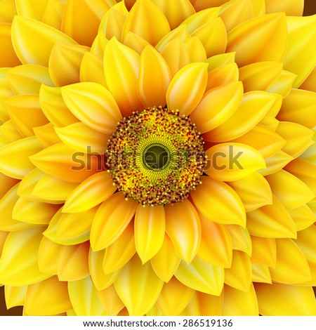 Sunflower realistic illustration. EPS 10 vector file included