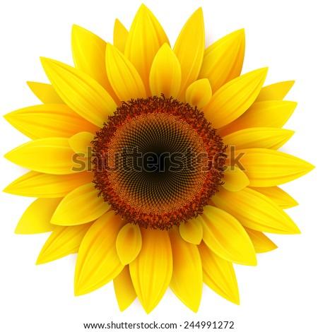 Sunflower Clip Art Fre...