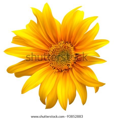 Sunflower vector flower