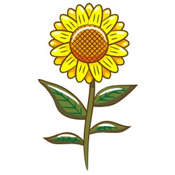 sunflower vector graphic design clipart
