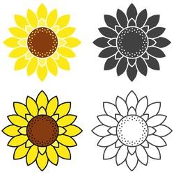 Sunflower Vector Illustration Set on White