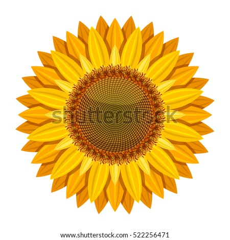 sunflower vector isolated on