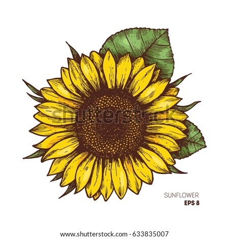 sunflower vintage engraved