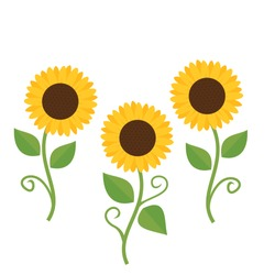 Sunflower with green leaves icon isolated on white background vector.